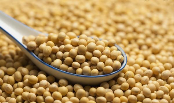 嫩江大豆价格